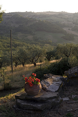Italy - Umbria - A flowerpot overlooks the Umbrian countryside at dusk