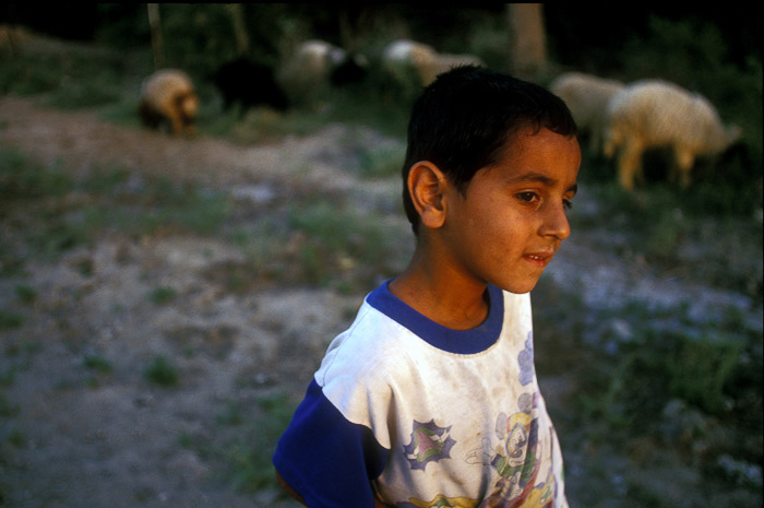 Iraq - Basra - A shepherd boy and his flock