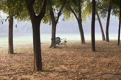 India - New Delhi - a bench in the early morning mist in Nehru Park