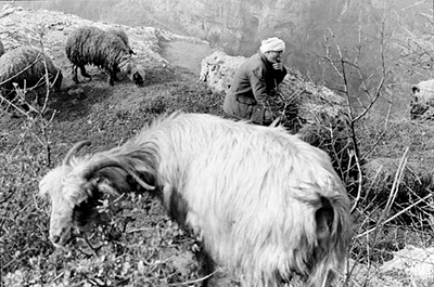 "Lebanon - B'charre - A shepherd and his flock of sheep and goats near Khalil Gibran's birthplace, B'charre, Northern Lebanon..  ..."" And He put His hand upon my shoulder and said, ""From this day you shall love this sheep more than any other in your flock, for she was lost and now she is found""...Gibran"