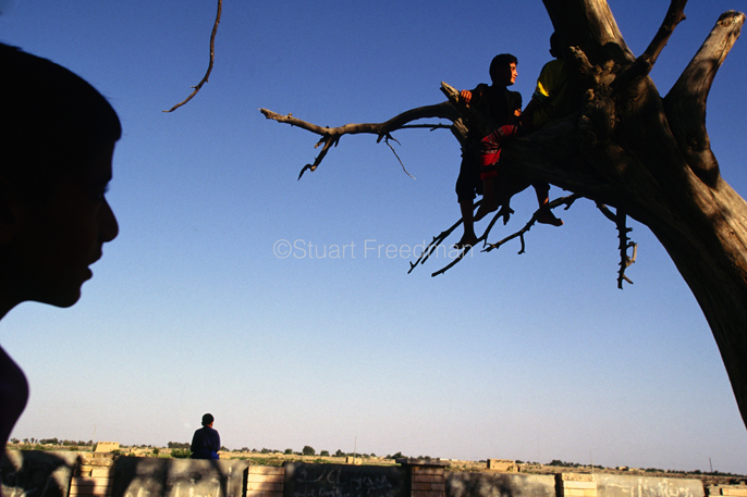 Iraq - Basra - Boys climb the tree of Adam at Al Qurnah near Basra. The tre, according to legend marked the Garden of Eden, at the convergence of the Euphrates and the Tigris Rivers