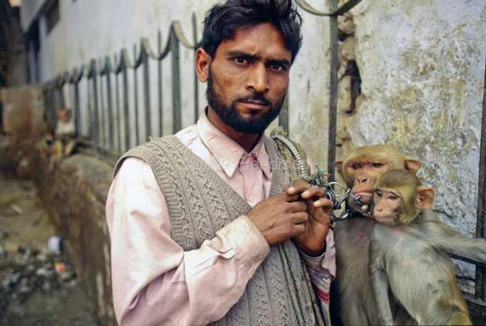 Indian - New Delhi - A man and his performing monkeys. The Kathiputli Colony in the Shadipur Depot